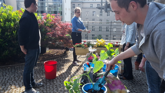 Gardening in the office? Why not!